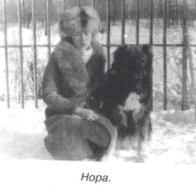 кавказская овчарка Нора