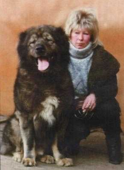 кавказская овчарка Риск