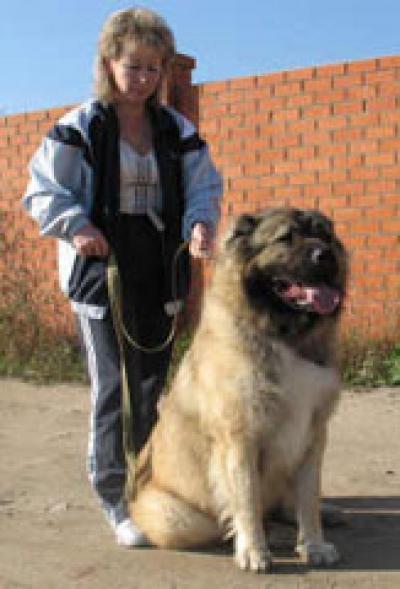 кавказская овчарка Русский Размер