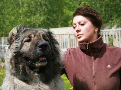 кавказская овчарка девочка, русский Медведь Заря заряница