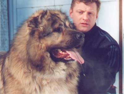 Кавказская овчарка Шато из Светлого Дома