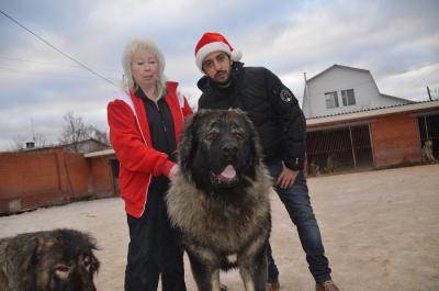 кавказская овчарка кобель, Русский Риск Долгожданный 1,5 года