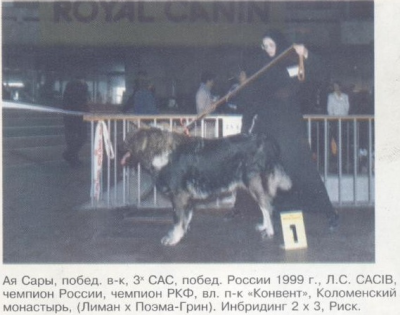кавказская овчарка Ая Сары