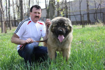 кавказская овчарка Адиль