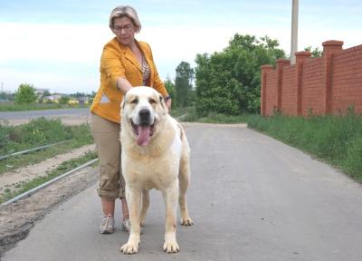 срдназиатская овчарка, алабай Русский Риск Янгын