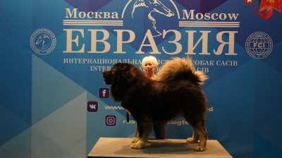 """РОССИЯ """"ЕВРАЗИЯ"""" 2018. РУССКИЙ РИСК ОТВАЖНЫЙ 2 - 3,5 года."""