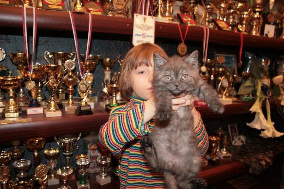 продажа британских котят, окрас черный дым.
