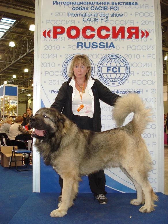 кавказская овчарка Датви Искандер Русский Риск