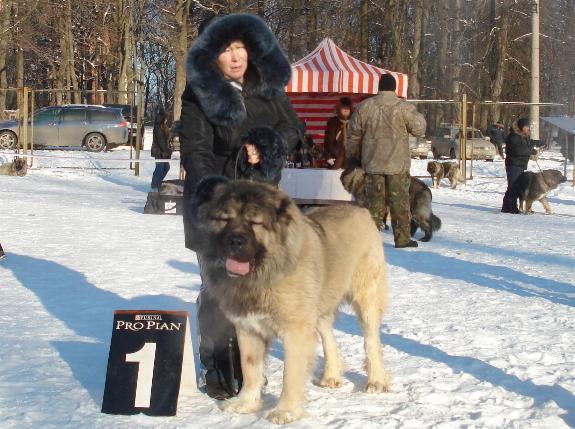 кавказская овчарк - кобель Датви Искандер Русский Риск 2 года и 3 месяца