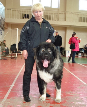 кавказская овчарка Русский Риск Чародей 20 мес.