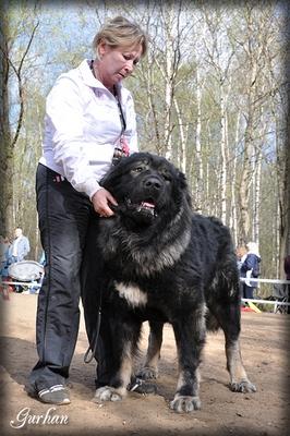 кавказская овчарка, кобель Русский Риск Тайфун