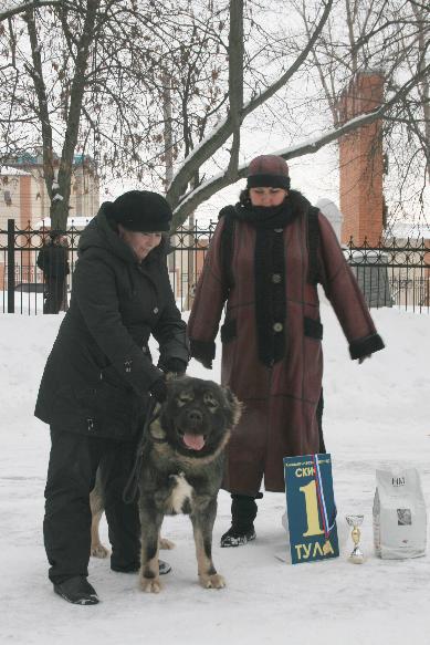 Кавказская овчарка Русский Риск Атаманша Моя