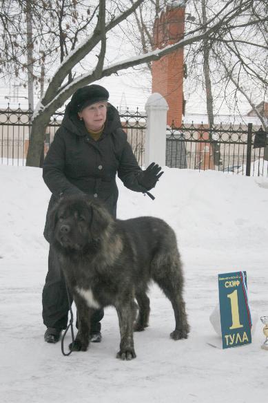 кавказская овчарка Дикая Стая Витизь