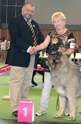 кавказская овчарка Властелин Русский Риск от Акбеку Чемпион Мира 2011 года