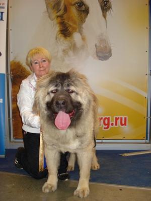 Выставка Золотой ошейник 2011, кавказская овчарка Русский Риск Шикарная Львица, Юный Чемпион породы 2011, Чемпион породы 2011