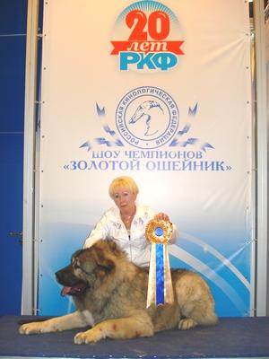 Выставка Золотой Ошейник 2011, кавказская овчарка Властелин Русский Риск от Акбек Чемпион породы